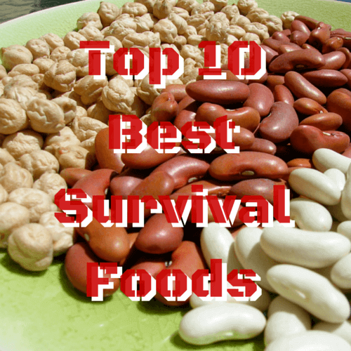 Top 10 Best Survival Foods